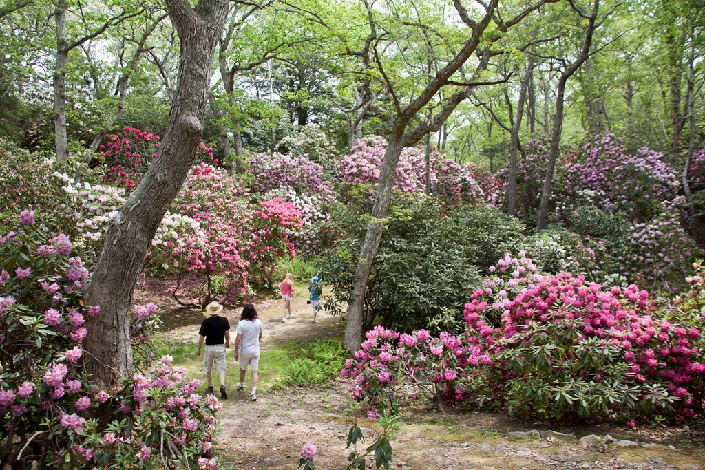 Bus Tour Heritage Museum Gardens Rhododendron Festival