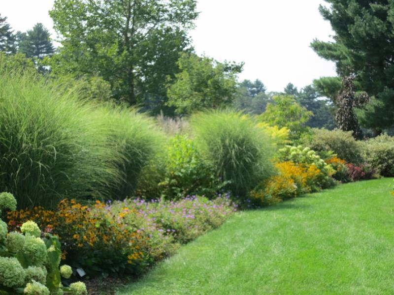 Design a Sunny Perennial Border