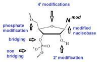 RNA modifications