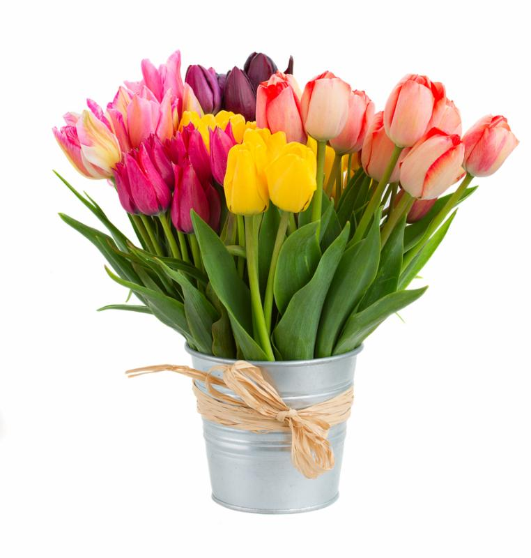 Bunch  of spring  tulips flowers in metal pot   isolated on white background