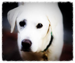 white-dog-polaroid.jpg