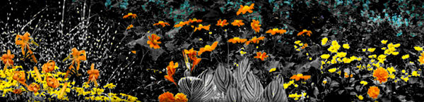 abstract-color-flowers.jpg
