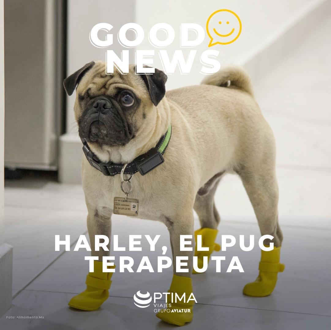 Perro terapeuta covid19.JPG