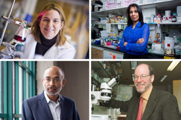 Four MIT faculty are among the the 168 fellows of the National Academy of Inventors elected in 2015. Clockwise from top left, Angela M. Belcher, Sangeeta N. Bhatia, H. Robert Horvitz, and Emery N. Brown.