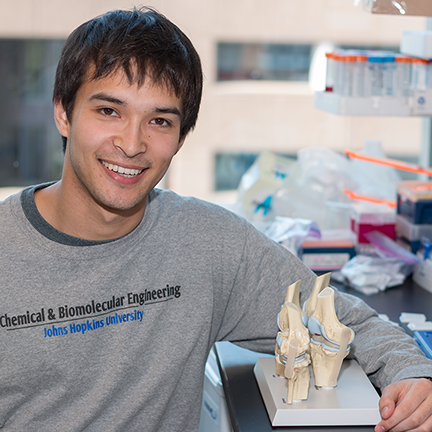 MPC-CMSE Summer Scholar Michael Porter holds a model of knee joints in Hammond Lab_ where he wi__ll be working this summer to design and synthesize layer-by-layer nanoparticles to deliver a drug to cartilage in the knee.