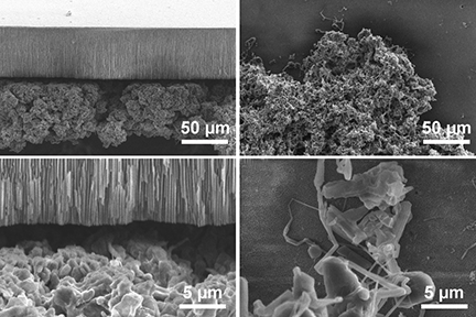 At right, scanning electron microscope (SEM) images show the two types of lithium deposits, the bulky, mossy type (top), which grows from its base, and the needle-like dendritic type (bottom), which grows from the tips.  Images courtesy of Peng Bai