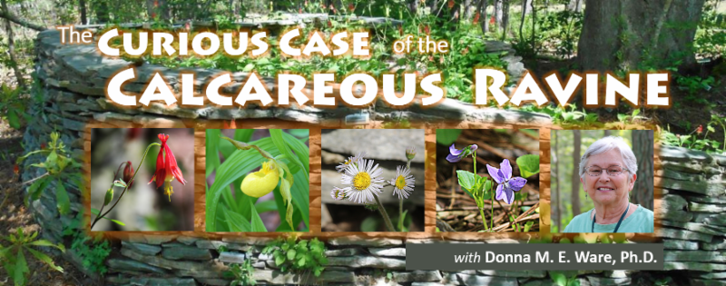 The Curious Case of the Calcareous Ravine