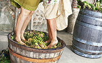 Stomping on wine