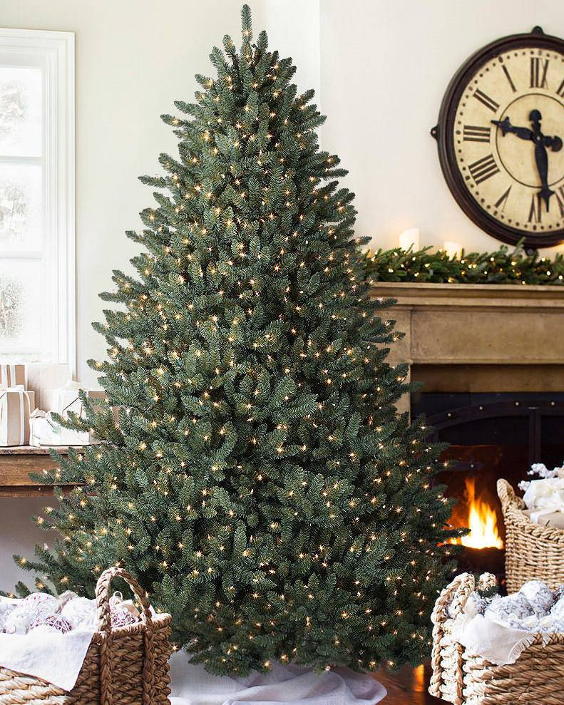 HOW TO: Plant Your Potted Christmas Tree!