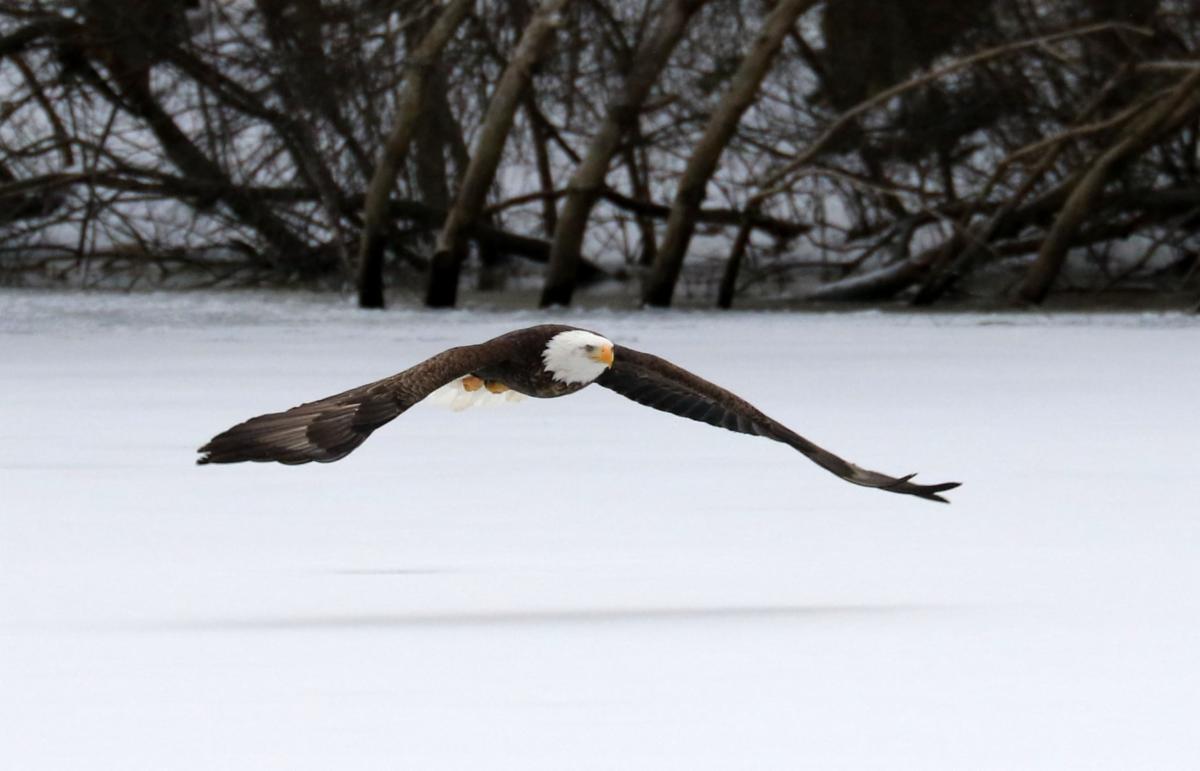 eagle snow.jpg