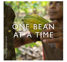 One Bean At A Time. 