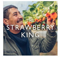 The Strawberry King.