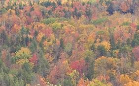 An Autumn Bounty of Citizen Science
