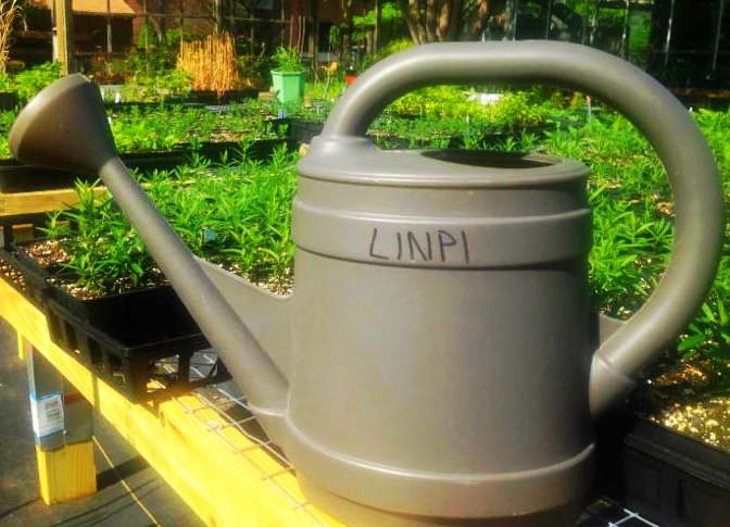 LINPI watering can