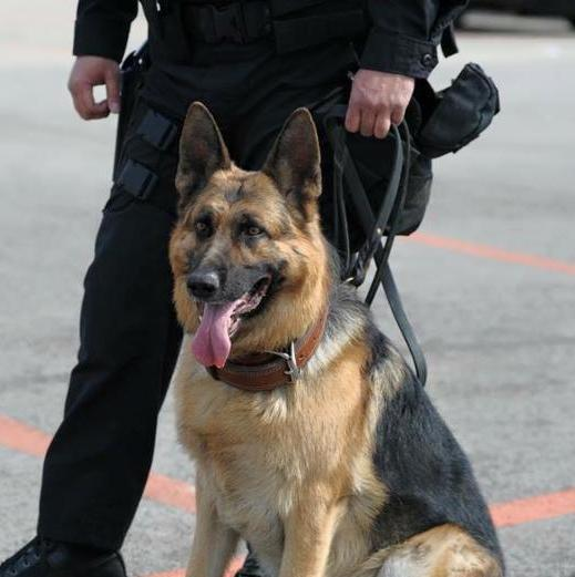 K9 Picture