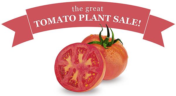 Uc Master Gardener Great Tomato Plant Sale April 8 2017 Richmond Public Libr