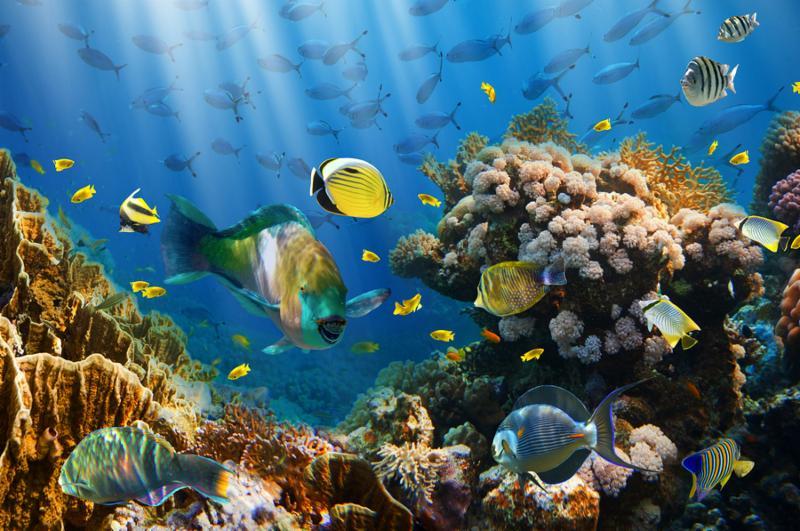 coral_fish_redsea.jpg