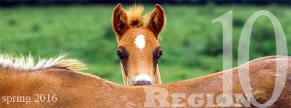 foal in spring
