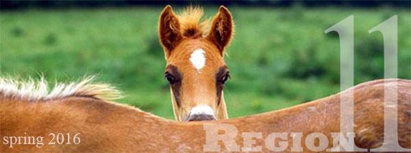 region 11 foal spring