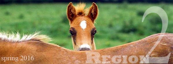 region 2 foal spring