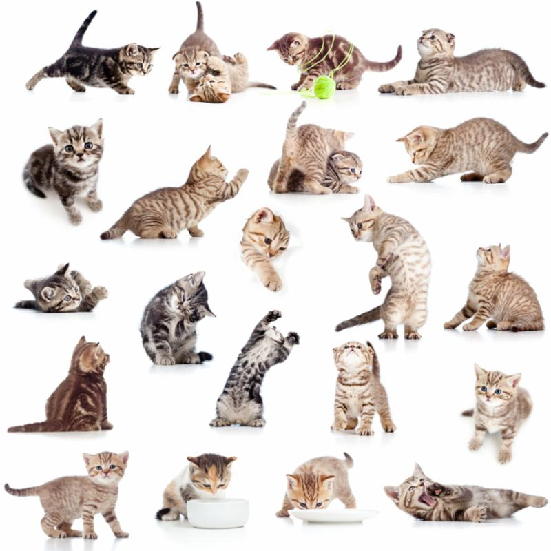 collection_cats_playing.jpg