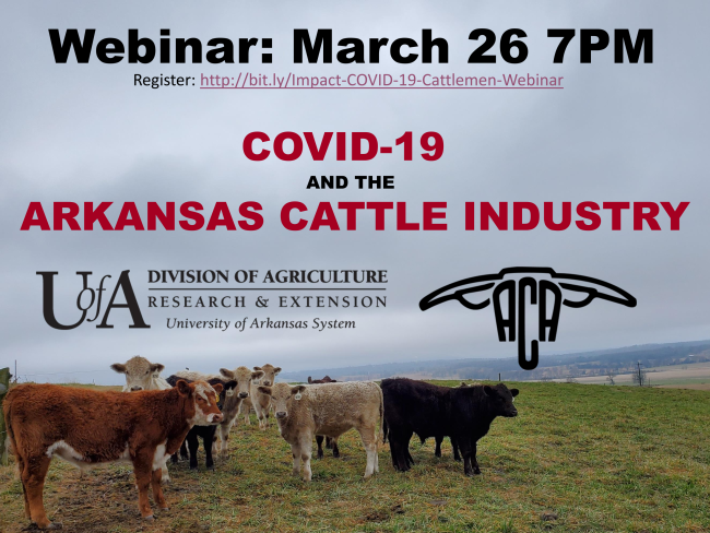 PDF flyer for March 26 7pm webinar on COVID-19 and the Arkansas Cattle Industry