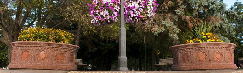 banner - flowers