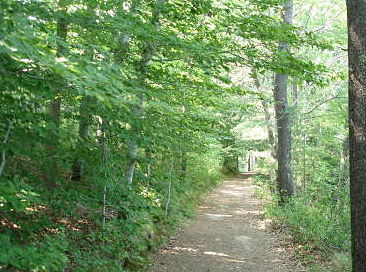 The path from the Dining Hall to the Camphouse at Pinewoods