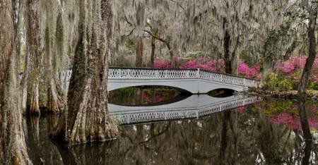 Magnolia Plantation Bridge by Mary Louise Ravese