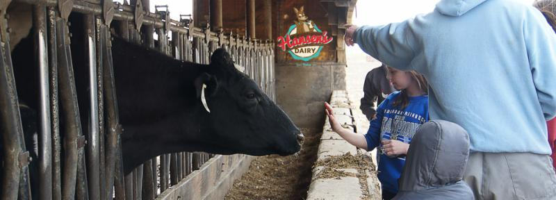 A group of kids got to visit with the dry cows.