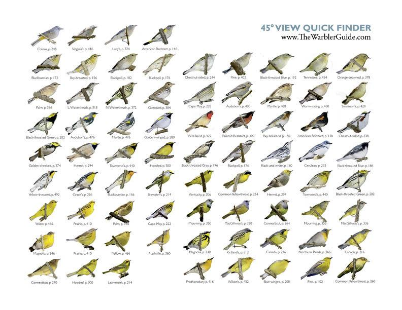 Warbler_guide_quick_find_princeton_press