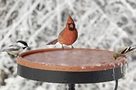 heated_bird_bath