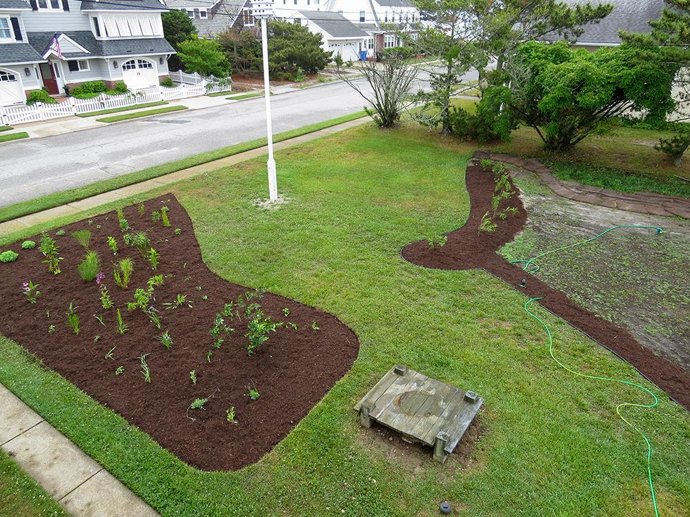 planting_meadow_20144