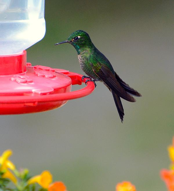 hummingbird_feeder