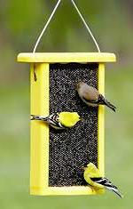 goldfinches+feeder