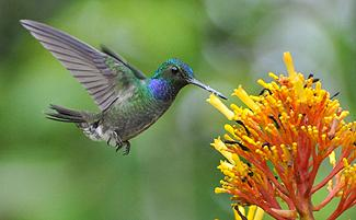 hummingbird_feeding