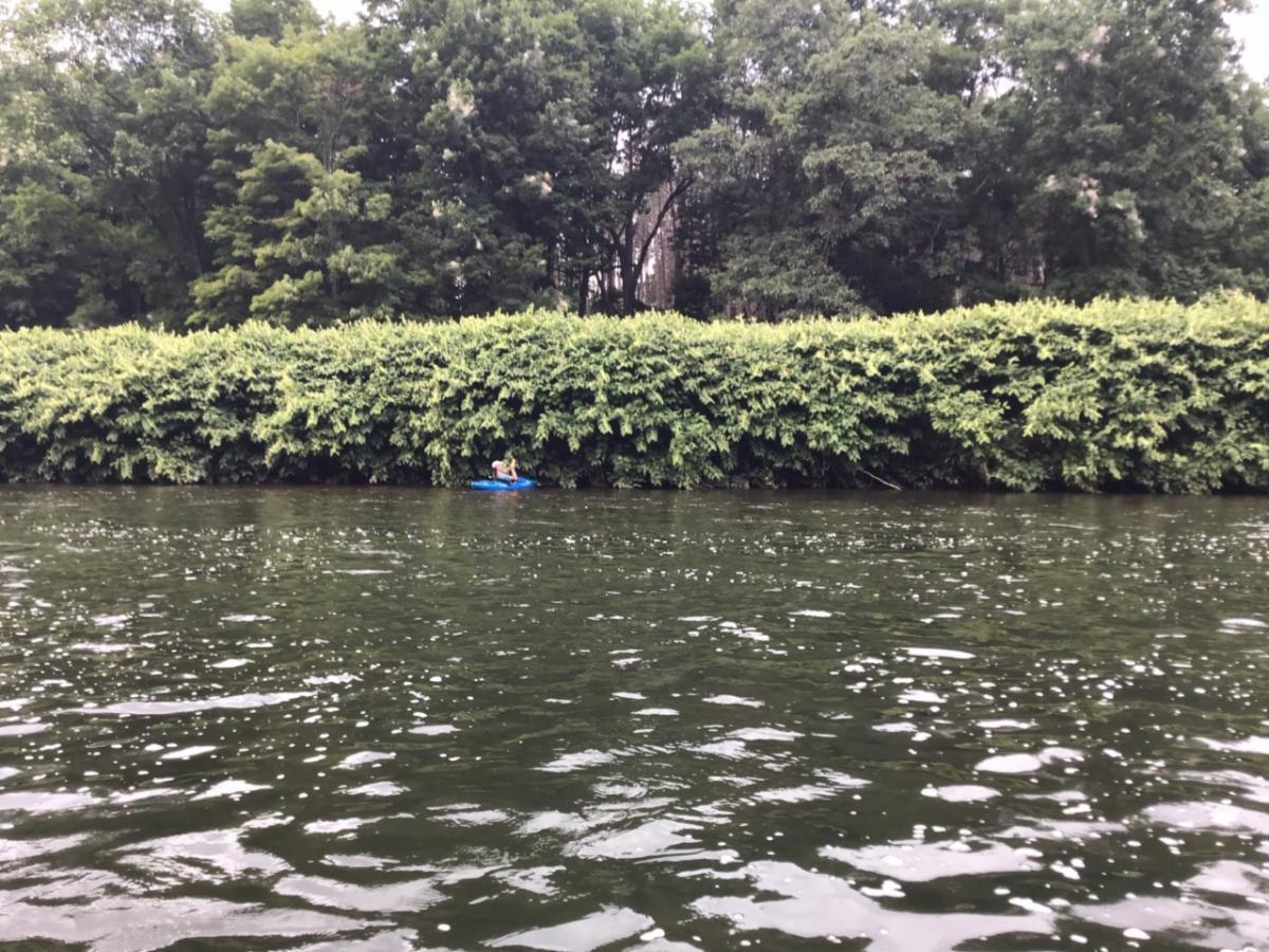 PSU biologists were amazed by the extent of knotweed on the river. They work in invasives in PA and can only name a couple of rivers that have this much knotweed. This stand is on the NY side at Knights pool and extends half mile and 100 yards deep.