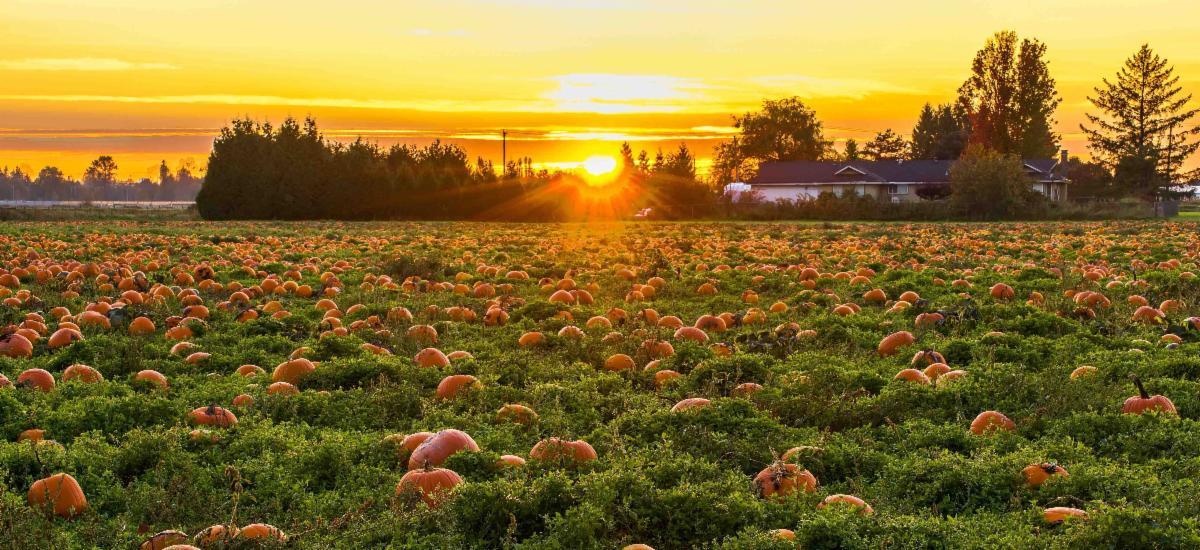 Halloween Pumpkin Patch You-Pick Farm Hampton Roads
