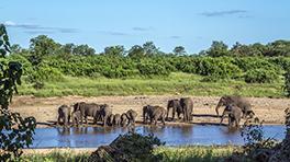 Kampama Game Reserve 264