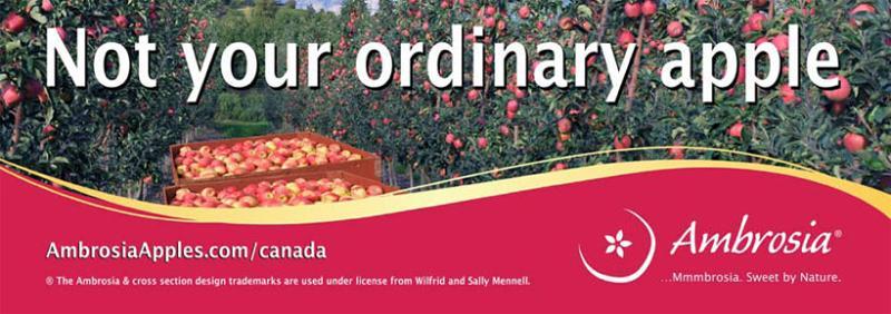 BC Ambrosia Apples